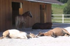 hesteoghusdyr_hitarmering_lille4