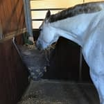 Hest der spiser hø af hayfeeder corner