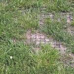 Græsset vokser op omkring TDJ Heavymats