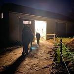 hest på Mudsafe foran stalden