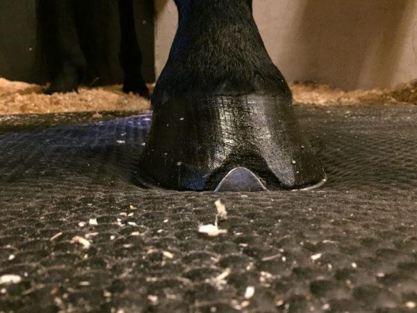 Hestehov på HIT Softbed der aflaster for sener og led