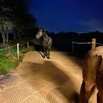 hest står på på Veletableret område med Mudsafe