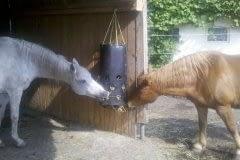 2-heste