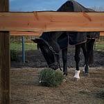 Hest i en sygefold med bund af TDJ Heavymats