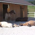 Heste slapper af på fast underlag, tdj heavymat, tdj hit armering, undgå mudder,