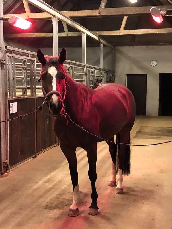 TDJhors, TDJhors Heater, varmelampe, heste, varmebehandling af heste,