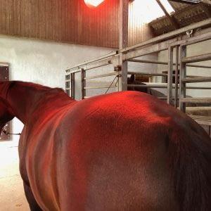 TDJhors, TDJ Horse heater, varmelampe, heste